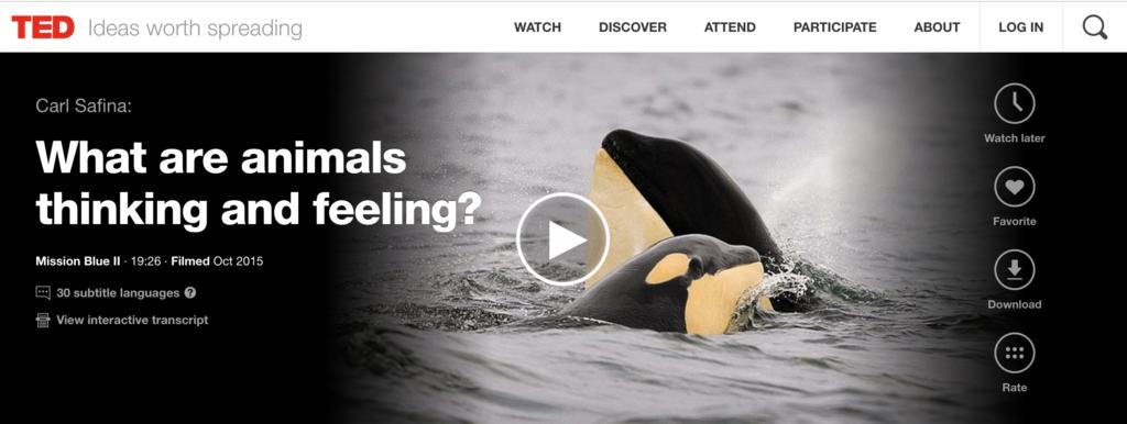 Animal thinking